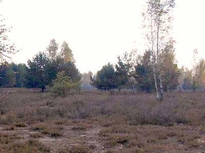 PV-Freiflächenanlage Reicherskreuzer Heide